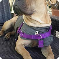 Adopt A Pet :: Rocco - San Clemente, CA