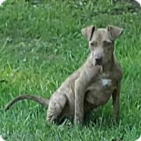 Adopt A Pet :: Mandy Ellen - Trenton, NJ