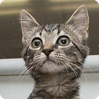 Adopt A Pet :: Mitzi - Troy, OH