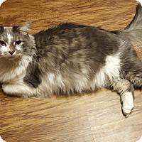 Adopt A Pet :: Noah - Alpharetta, GA