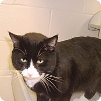Adopt A Pet :: Max - Muscatine, IA