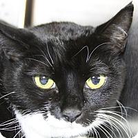 Adopt A Pet :: Anne - Sarasota, FL