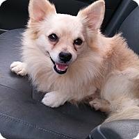 Adopt A Pet :: Jackpot - Loganville, GA