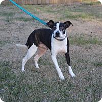 Adopt A Pet :: Presley - Columbia, TN