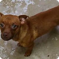 Adopt A Pet :: Jack 2 - Savannah, GA