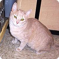 Adopt A Pet :: Merida - Colmar, PA