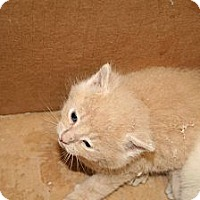 Adopt A Pet :: Sunkist - Washington Terrace, UT