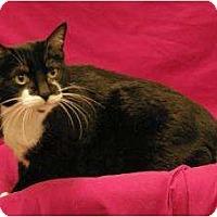 Adopt A Pet :: Cinder - Sacramento, CA