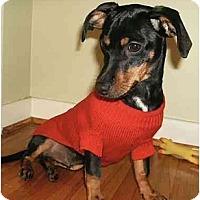 Adopt A Pet :: Jimbo - Mooy, AL