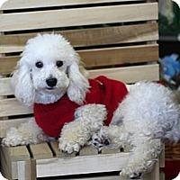 Adopt A Pet :: Toby - Mooy, AL