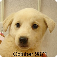 Adopt A Pet :: October - baltimore, MD