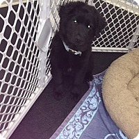 Adopt A Pet :: Jack - Jupiter, FL