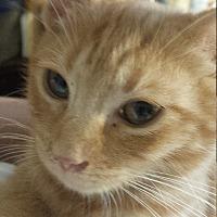Adopt A Pet :: Kayla - Seneca, SC