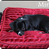 Adopt A Pet :: Minnie - Rockwall, TX