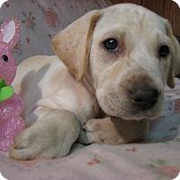 Adopt A Pet :: Opal - Bowie, MD