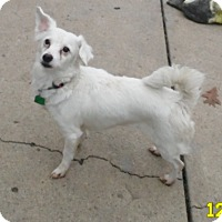 Adopt A Pet :: Jenny - mooresville, IN