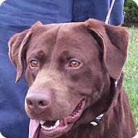 Adopt A Pet :: Tannenbaum - Boston, MA