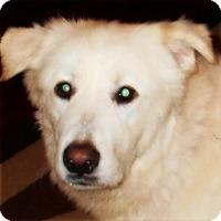Adopt A Pet :: Charlie - Kyle, TX
