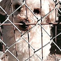 Adopt A Pet :: Joey-ADOPTION PENDING - Boulder, CO