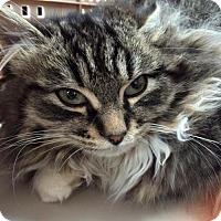 Adopt A Pet :: Euphoria - Caistor Centre, ON