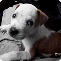 Adopt A Pet :: IKE - Conroe, TX