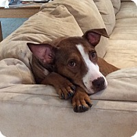 Adopt A Pet :: Bella Thorne - Jersey City, NJ