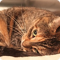 Adopt A Pet :: Tiffany - Appleton, WI