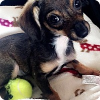 Adopt A Pet :: Paris - Oviedo, FL