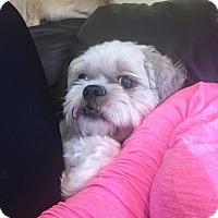 Adopt A Pet :: Tippy - Tenafly, NJ