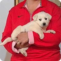 Adopt A Pet :: Ruby - South Euclid, OH