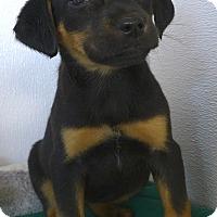 Adopt A Pet :: Zena - Manning, SC