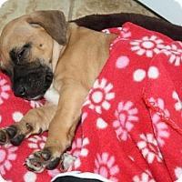 Adopt A Pet :: Lilo - Clovis, CA