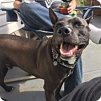 Adopt A Pet :: Sawyer *in Foster* - Vancouver, BC