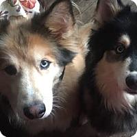 Adopt A Pet :: Gypsy & Chloe - Minerva, OH