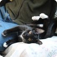 Adopt A Pet :: Warbling - San Carlos, CA