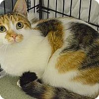 Adopt A Pet :: Carla - Muskegon, MI