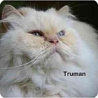 Adopt A Pet :: Truman - Portland, OR