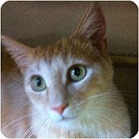 Adopt A Pet :: Monty - Modesto, CA