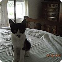Adopt A Pet :: Sophie - Riverside, RI