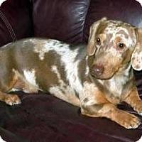 Adopt A Pet :: Juneau - Staunton, VA