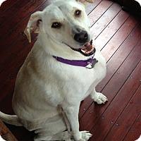 Adopt A Pet :: TJ - Foster, RI