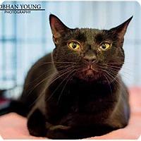 Adopt A Pet :: BG - Fredericksburg, VA