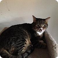 Adopt A Pet :: Romer - Temecula, CA
