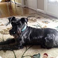 Adopt A Pet :: Vinny-News! - Laurel, MD