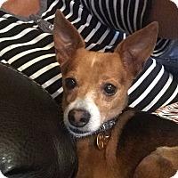 Adopt A Pet :: Sanson - Miami, FL