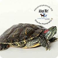 Adopt A Pet :: FILLUP - Alexandria, VA