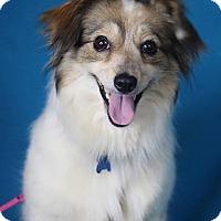 Adopt A Pet :: Roanne - Minneapolis, MN
