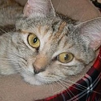 Adopt A Pet :: Mamma Kitty - Stafford, VA