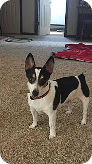 Terrier (Unknown Type, Medium) Mix Dog for adoption in Lockport, New York - Willie