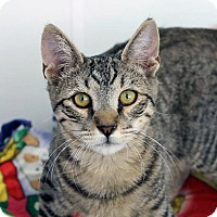 Adopt A Pet :: Drax - Mountain Center, CA